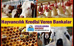 2019 Hayvancılık Kredisi Veren Bankalar