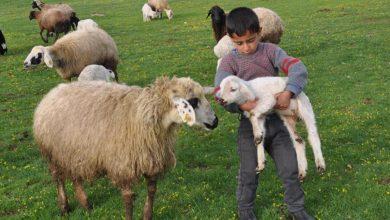 Hayvan Alımı Hibe Kredisi Başvurusu Nasıl Olur?